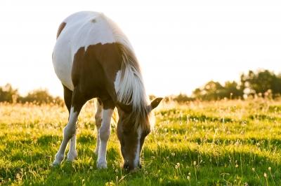 Lenny's Horse